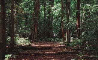 Gestão Florestal e CdR
